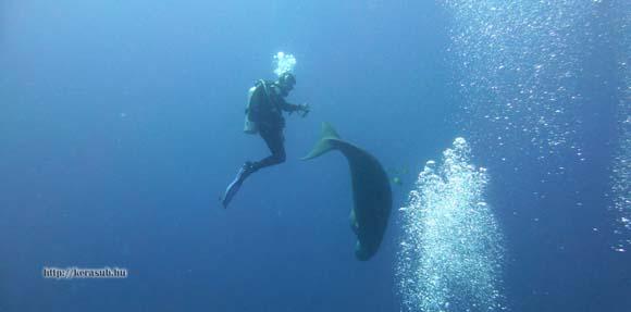 dugong-dance