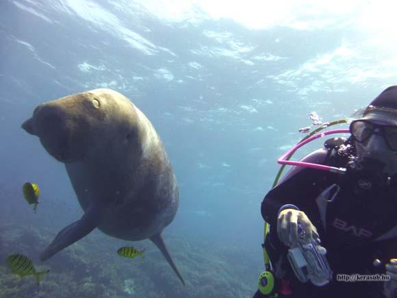 jjj-dugong